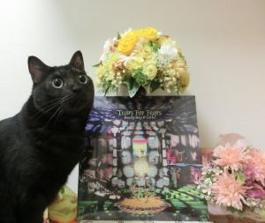 Manami's cat is in on it too! Meow Happy Birthday, Good Man, meow!